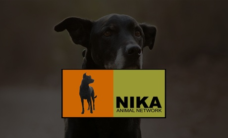 NIKA, Website Design Client, Guido Media
