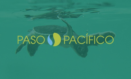 Paso Pacifico, Website Design Client, Guido Media